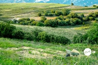 La Ribera Salada, Pirineos. Carissols